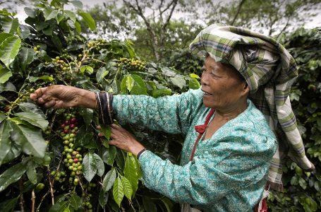 Accor apoya proyecto a favor de comunidades campesinas de la selva peruana