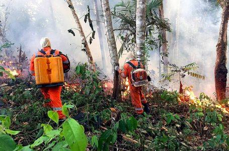 Argentina envía 200 bomberos a la Amazonía de Brasil para extinguir incendios