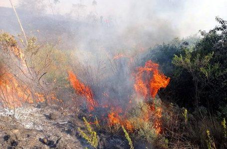 Recientes incendios forestales no afectaron patrimonio arqueológico de Cusco