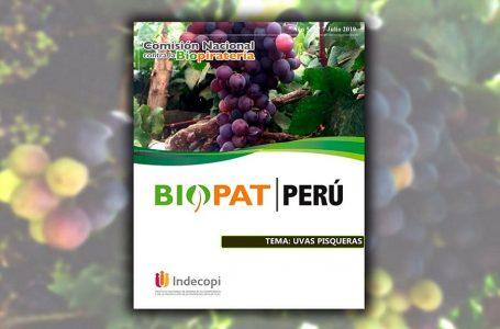 Informe ratifica que uva Quebranta para elaboración del Pisco es de origen peruano