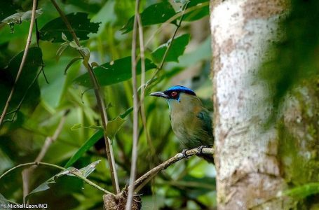 Descubre la primera Área de Conservación Regional (ACR) de Cajamarca [FOTOS]