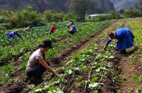 """Amak lanza campaña conjunta """"Turismo por la Agroecología"""" en Iquitos y Valle Sagrado"""