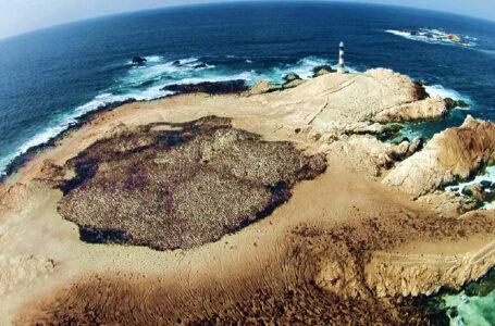 Punta Coles: reinician actividades turísticas en principal destino marino de Moquegua