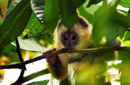 Elaborarán plan para preservar la biodiversidad de la selva de Cusco