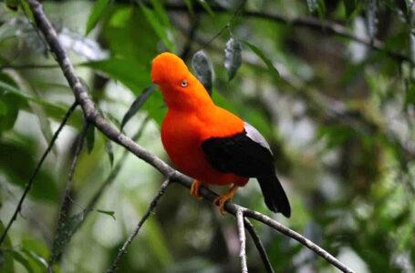 Aviturismo: Reserva de Biosfera Oxapampa será sede del XII Congreso Peruano de Ornitología