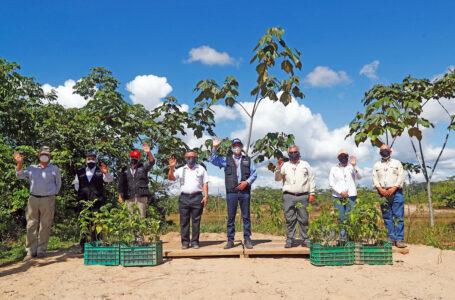 Culmina la reforestación de zonas afectadas por minería ilegal en Tambopata